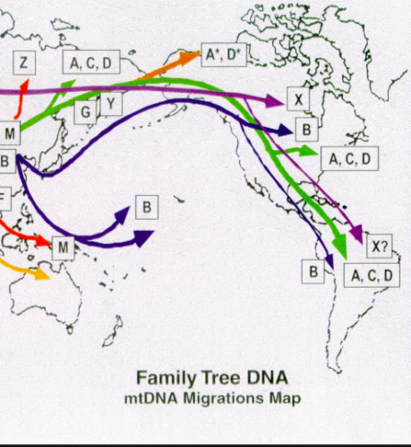 Native American mtDNA Haplogroups